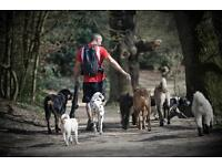 Experienced Driver/Dogwalker required for Top London Dog walking company.