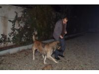 Mr Scissorhand true lover of animals