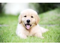 PAWSITIVE ENERGY: DOG WALKING/DOG WALKER PAISLEY