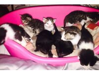 **KITTENS TO BE SOLD IN PAIRS **