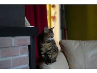 female bengal cat