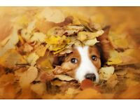 Autumn offer on Dog walking, Dog day care, Pet sitting. Give your pooch a hooch with us!