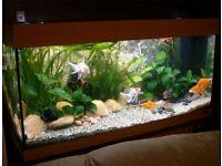 Jewel Rio 180 Aquarium in Beech, Fish Tank