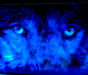 Glow In The Dark Wall Murals, Custom Signs, Decorative Painting