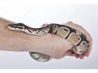 Software Developer in Oscar Award winning team offers Python Private Tution for $10 !