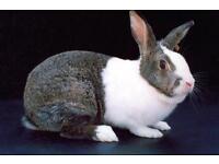 Nice Rabbit for sale