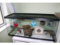 Large Gerbil glass tank for sale 3 levels