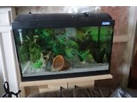 2ft Fish Tank & Stand