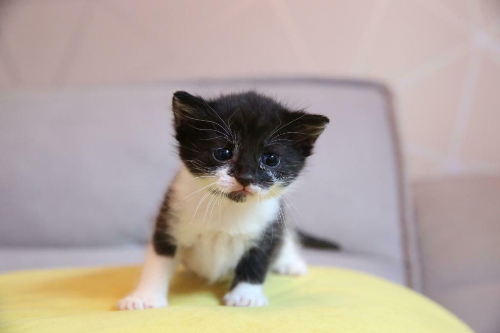 Sold Beautiful Baby Girl Kitten Currently 6 Weeks Old In Paisley Renfrewshire Gumtree