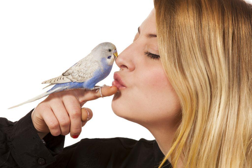 prettybirdshop