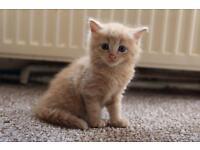 2 cute kittens boy with a soft fluffy hair