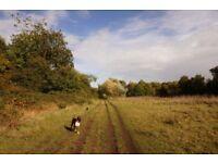 Dog walker in Beckenham- Pawsome Walks!