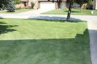 Artificial Turf. Say goodbye to Lawn Maintenance for good!