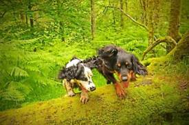Dog/puppy training classes
