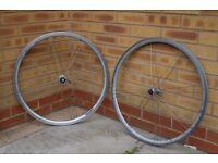 Road Bike Wheels - 700C Rim Brake QR 10 Speed