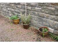 Selection of ceramic & glazed garden plant pots £10ea