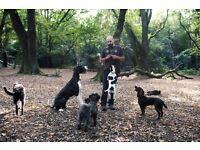 Professional dog walkers in West Hampstead, Queens Park and Hampstead