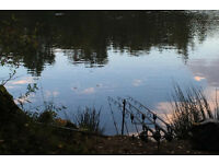 Wanted carp set up anything considered travel no problem gear fishing tackle