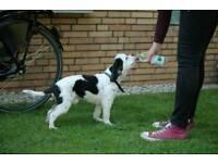 Dogwalking in Whitley Bay