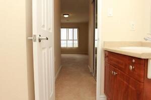 2 BEDROOM/2 BATHS ~ 5 Appliances, In-suite Laundry! (Cambridge) Kitchener / Waterloo Kitchener Area image 14