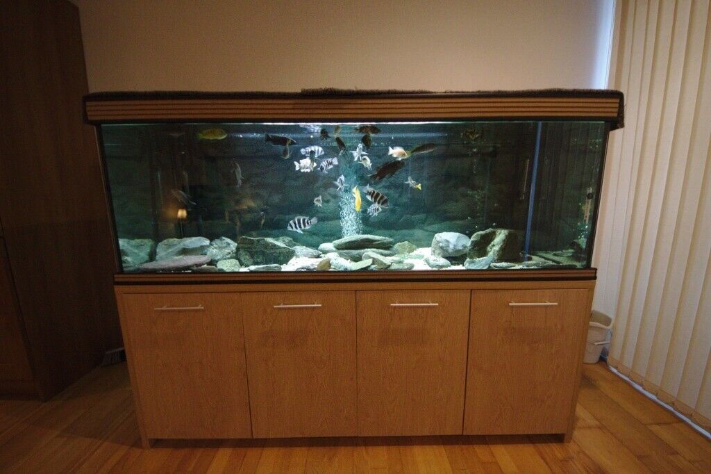 6ft fish tank aquarium full set up with African cichlids | in Plymouth,  Devon | Gumtree