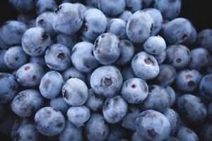 Organic blueberries for sale (you pick only)