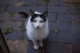 Dude needs a new home - Erdington - B23