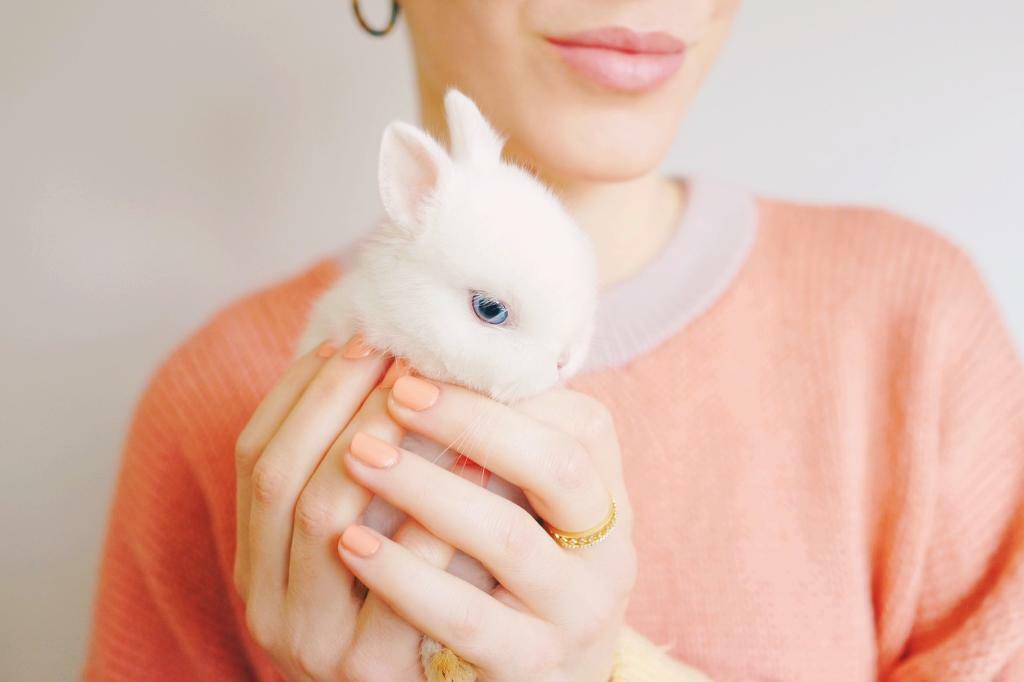 White baby Netherlands Dwarf bunny | in Golders Green ...