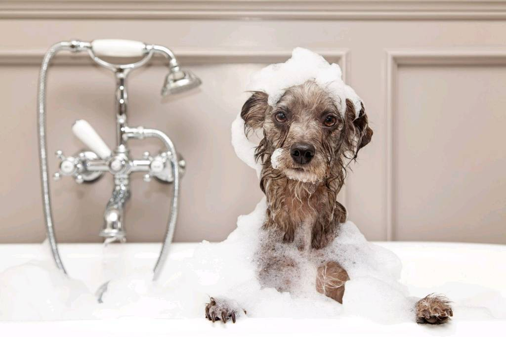 Dog Grooming Business For Sale In Ellesmere Shropshire Gumtree