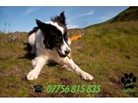 Dog Walking in North Edinburgh - Hiking Hounds Dog Walking Services (EST. 2015)