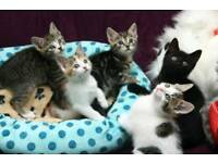 Beautiful litter of kittens ready now
