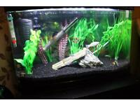 Fish aquarium..Big deal all in one