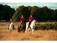 Horse rider needed for busy stables in Richmond Park