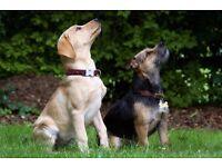 Dog Walking & Cat/Dog Sitters