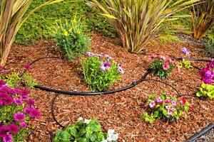 Gardening services (DAMAS) Ermington Parramatta Area Preview