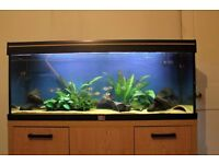 AQUAMANTA ECO 100 Fish Tank & Full Setup