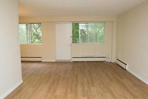 LARGE 2 Bedroom near the Victoria Hospital! Pet Friendly London Ontario image 5