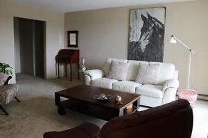 Leamington 1 Bedroom Apartment for Rent: Laundry, parking, pool