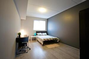 Beautiful Student Apartments - Wifi & AC Included! CALL TODAY! Kitchener / Waterloo Kitchener Area image 5