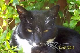 Lost in Pontnewydd Black and White Male Cat answers to TITCH