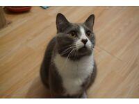 Cat for sale asap