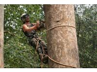 Tree surgeon London