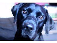 Dog Walker Urmston - area
