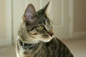 Missing Cat - Burnbank, Hamilton