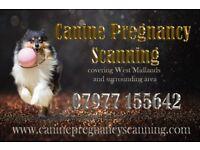 Canine Pregnancy Scanning - Ultrasound Service