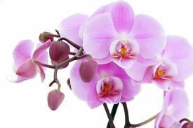 Mothers Day Pop-Up Flower Shop