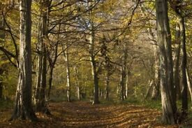 LOOKING WOODLAND/FOREST TO RENT
