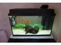 55 litre aquarium with assessories