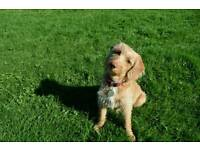 Dog walker/Pet Sitter/Daycare & Boarding - Fuzzy Paws Cardiff Dog Walking & Pet Sitting Services
