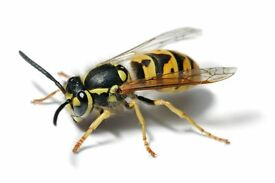 Dont get stung. Fixed Price Wasp Nest Removal